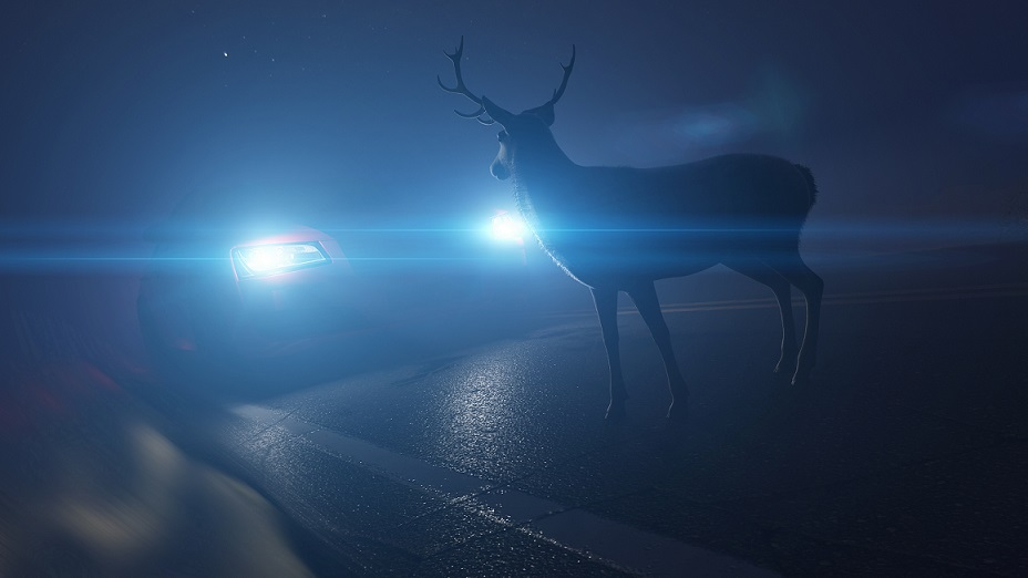Deer standing in front of a vehicle in the road