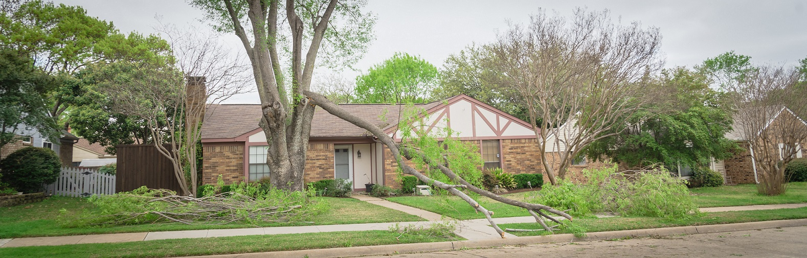 house with tree that has fallen on the roof